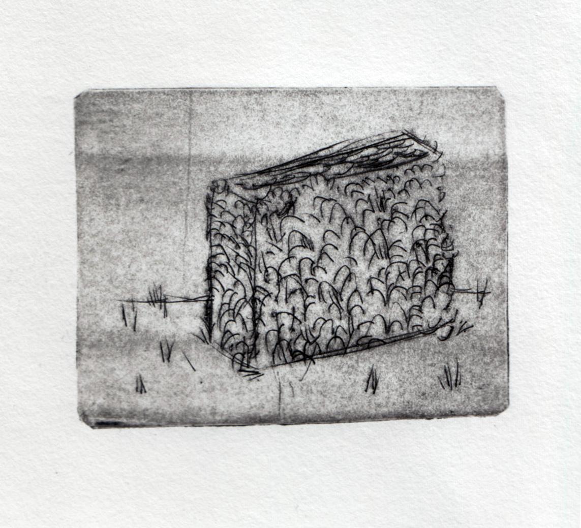 hedge-drypoint